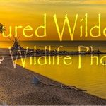 Captured Wilderness Nature Photography profile image.