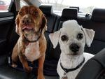 Fur the Love of Dogs Inc profile image.