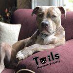 Tails Humane Society profile image.