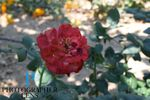 Photographer Lens profile image.